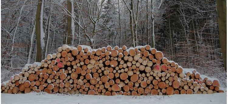 100% Зимний лес